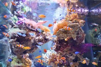 Aquarium tojo 北九州